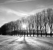 Rheinland, Niederrhein, Xanten, Naturschutzgebiet Bislicher Insel, Winter, Schnee, Frost, Baeume, Pappeln, Silhouetten, Gegenlicht, Sonnenstrahlen