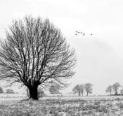 Rheinland, Niederrhein, Voerde, Naturschutzgebiet Momm-Niederung, Winter, Schnee, Typische Kopfweiden