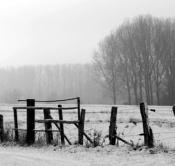 Rheinland, Niederrhein, Xanten, Naturschutzgebiet Xantener Altrhein, Bislicher Insel, Winter, Schnee, Baeume, Zaun, Weidenzaun