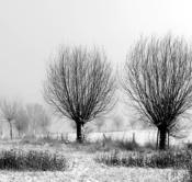 Rheinland, Niederrhein, Xanten, Naturschutzgebiet Xantener Altrhein, Bislicher Insel, Winter, Schnee, Baeume, Typische Kopfweiden