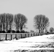 Rheinland, Niederrhein, Kalkar, Emmericher Eyland, Baeume, Pappeln, Baumreihe, Pappelreihe, Winter, Schnee, Tauwetter