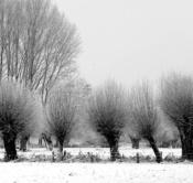 Rheinland, Niederrhein, Krefeld, Naturschutzgebiet Huelser Bruch, Winter, Schnee, Baeume, Kopfweiden
