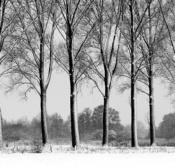 Rheinland, Niederrhein, Kranenburg, De Gelderse Poort, Naturschutzgebiet Dueffel, Kranenburger Bruch, Baeume, Allee, Pappeln, Pappelallee, Winter, Schnee