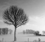 Rheinland, Niederrhein, Wesel-Ginderich, Schnee, Winter, Nebel, Bodennebel, Baeume