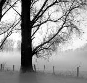 Rheinland, Niederrhein, Xanten, Naturschutzgebiet Xantener Altrhein, Bislicher Insel, Baeume, Pappeln, Pappelbaeume, Sonnenuntergang, Schnee, Winter, Nebel, Bodennebel