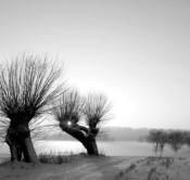 Rheinland, Niederrhein, Xanten, Naturschutzgebiet Xantener Altrhein, Bislicher Insel, Typische Kopfweiden, Winter, Schnee, Sonnenuntergang, Abendstimmung
