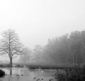 Rheinland, Niederrhein, Leuth, Naturpark Schwalm-Nette, Spaetsommer, Morgens, Nebel, Dunst, Gewaesser, Baum