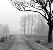 Rheinland, Niederrhein, Wachtendonk, Landschaft, Dunst, Morgenstimmung, Weg, Feldweg